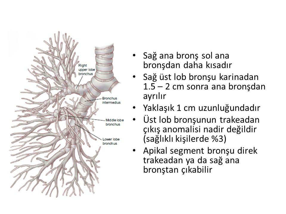 Sağ ana bronş sol ana bronşdan daha kısadır Sağ üst lob bronşu karinadan 1.5 – 2 cm sonra ana bronşdan ayrılır Yaklaşık 1 cm uzunluğundadır Üst lob bronşunun trakeadan çıkış anomalisi nadir değildir (sağlıklı kişilerde %3) Apikal segment bronşu direk trakeadan ya da sağ ana bronştan çıkabilir