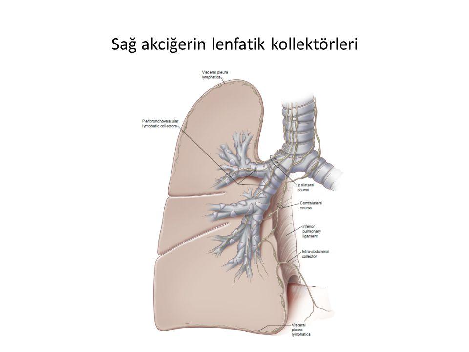 Sağ akciğerin lenfatik kollektörleri