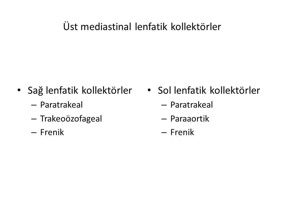 Üst mediastinal lenfatik kollektörler Sağ lenfatik kollektörler – Paratrakeal – Trakeoözofageal – Frenik Sol lenfatik kollektörler – Paratrakeal – Paraaortik – Frenik