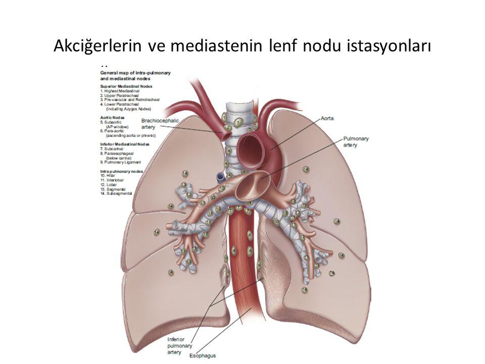 Akciğerlerin ve mediastenin lenf nodu istasyonları