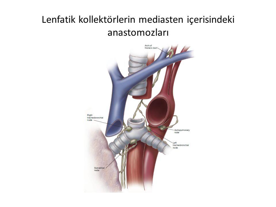 Lenfatik kollektörlerin mediasten içerisindeki anastomozları