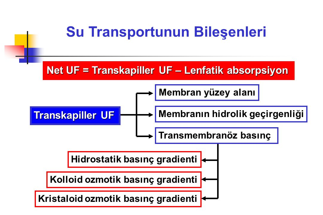 Su Transportunun Bileşenleri Net UF = Transkapiller UF – Lenfatik absorpsiyon Membran yüzey alanı Membranın hidrolik geçirgenliği Hidrostatik basınç g