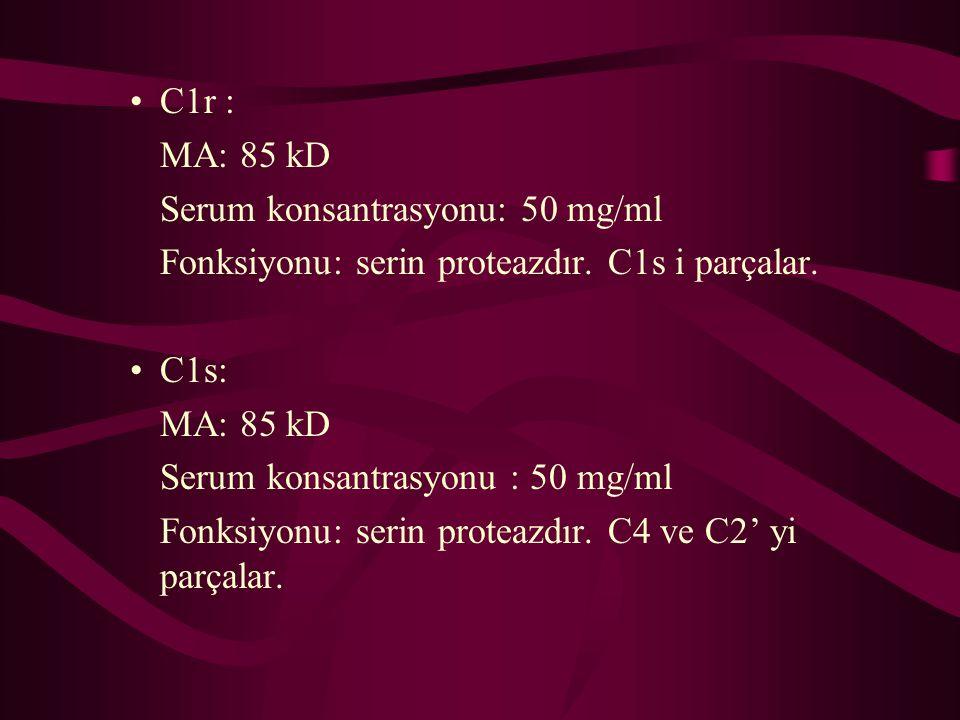 C1r : MA: 85 kD Serum konsantrasyonu: 50 mg/ml Fonksiyonu: serin proteazdır. C1s i parçalar. C1s: MA: 85 kD Serum konsantrasyonu : 50 mg/ml Fonksiyonu