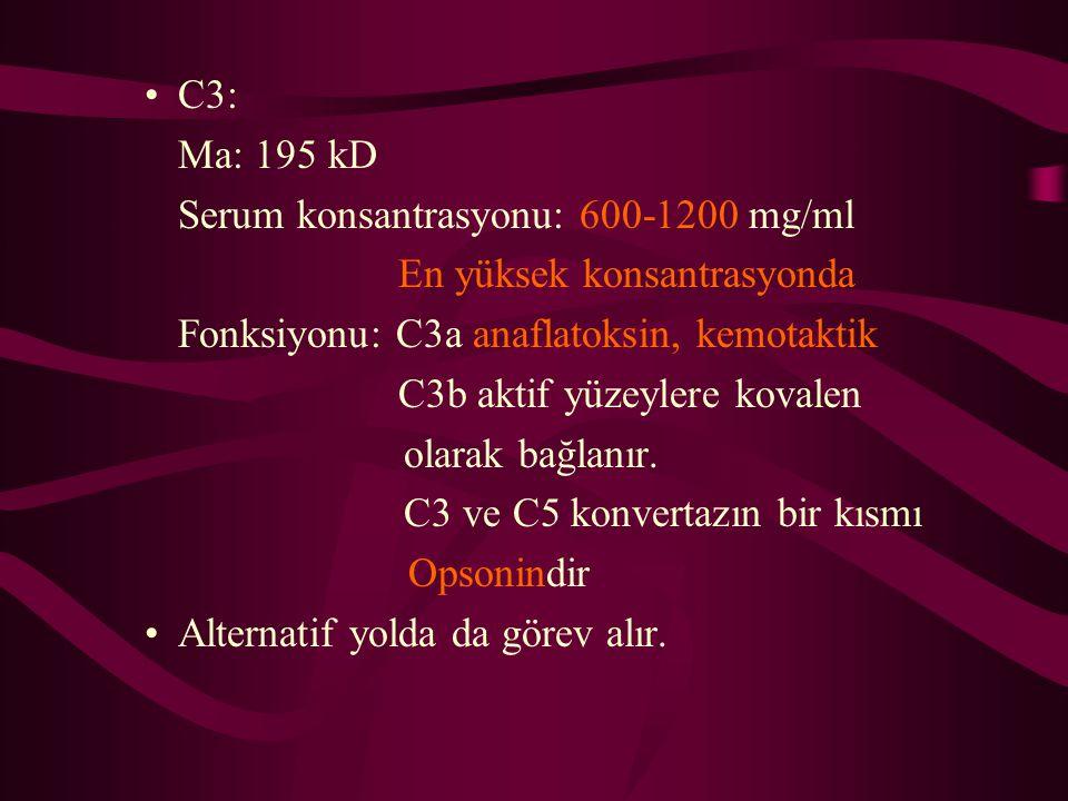 C3: Ma: 195 kD Serum konsantrasyonu: 600-1200 mg/ml En yüksek konsantrasyonda Fonksiyonu: C3a anaflatoksin, kemotaktik C3b aktif yüzeylere kovalen ola