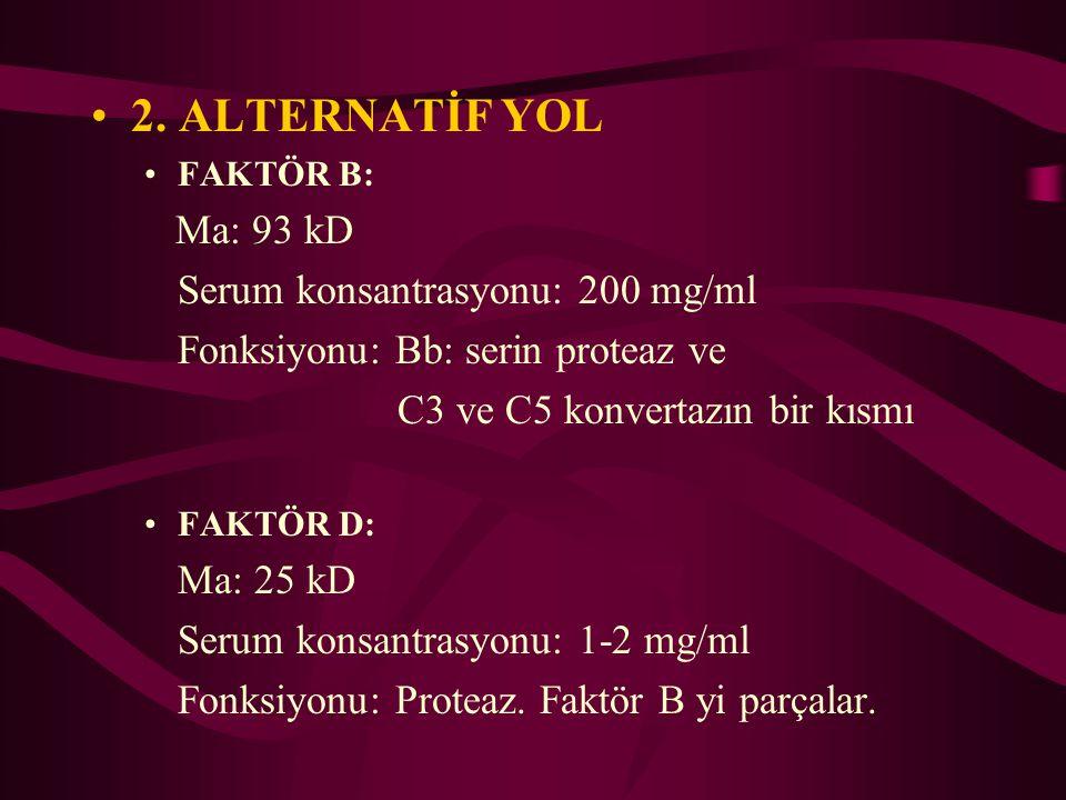 2. ALTERNATİF YOL FAKTÖR B: Ma: 93 kD Serum konsantrasyonu: 200 mg/ml Fonksiyonu: Bb: serin proteaz ve C3 ve C5 konvertazın bir kısmı FAKTÖR D: Ma: 25