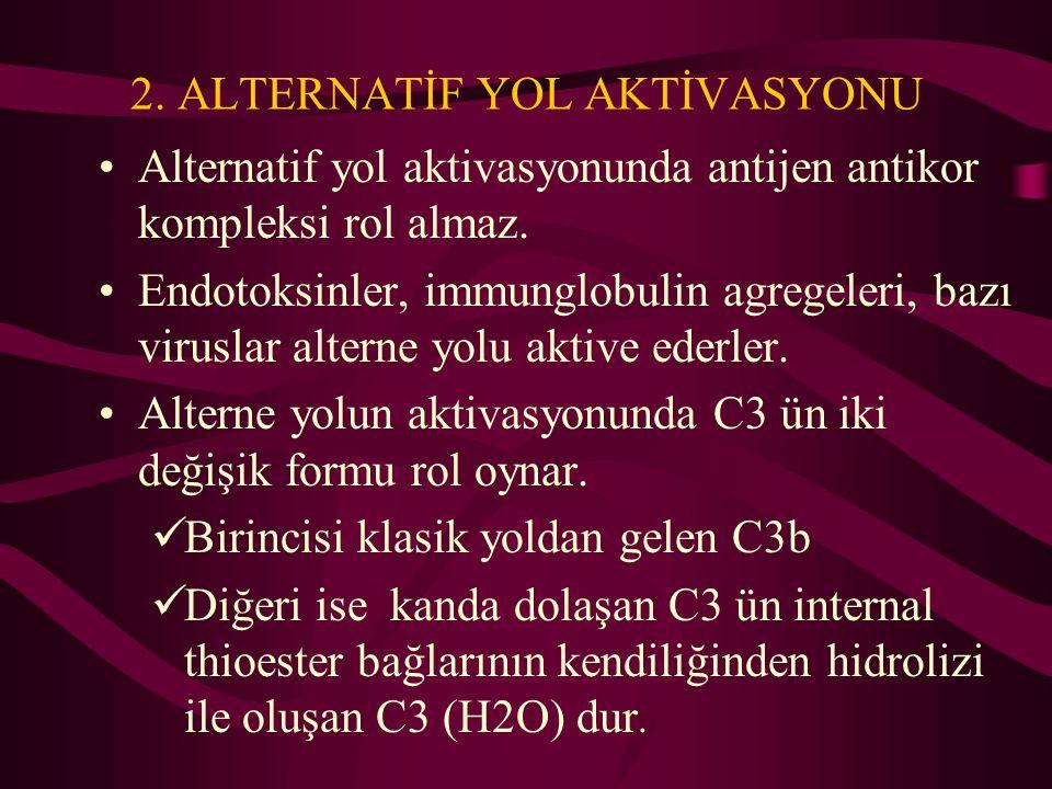 2. ALTERNATİF YOL AKTİVASYONU Alternatif yol aktivasyonunda antijen antikor kompleksi rol almaz. Endotoksinler, immunglobulin agregeleri, bazı virusla