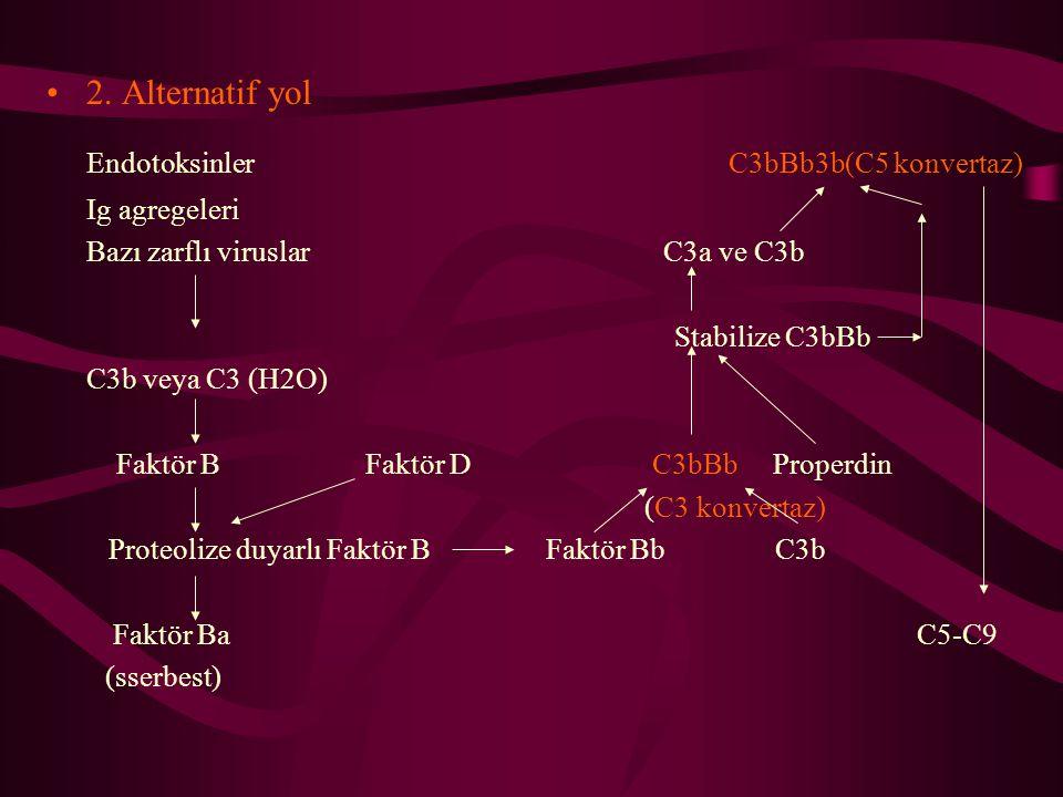 2. Alternatif yol Endotoksinler C3bBb3b(C5 konvertaz) Ig agregeleri Bazı zarflı viruslar C3a ve C3b Stabilize C3bBb C3b veya C3 (H2O) Faktör BFaktör D