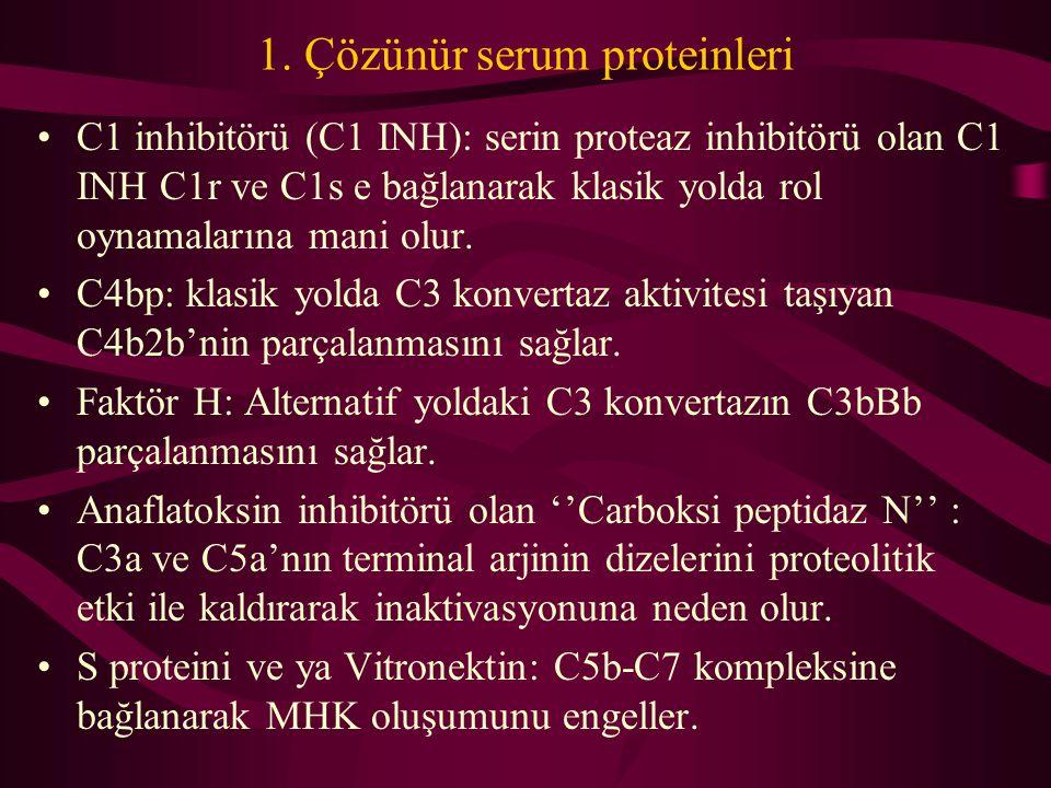 1. Çözünür serum proteinleri C1 inhibitörü (C1 INH): serin proteaz inhibitörü olan C1 INH C1r ve C1s e bağlanarak klasik yolda rol oynamalarına mani o