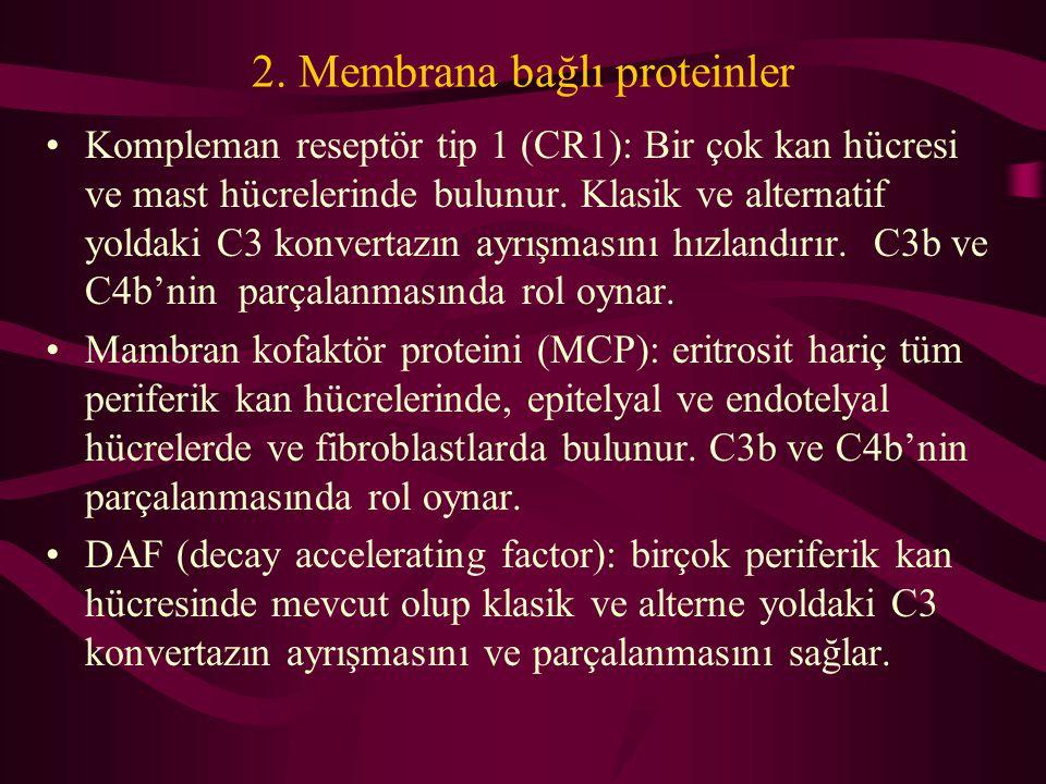 2. Membrana bağlı proteinler Kompleman reseptör tip 1 (CR1): Bir çok kan hücresi ve mast hücrelerinde bulunur. Klasik ve alternatif yoldaki C3 konvert
