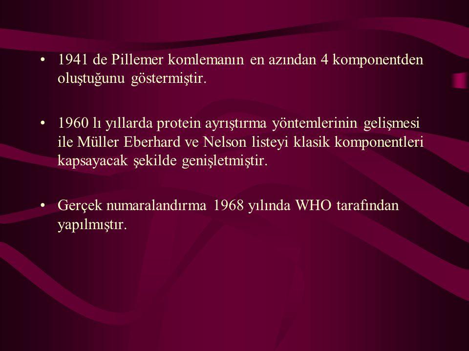 1941 de Pillemer komlemanın en azından 4 komponentden oluştuğunu göstermiştir. 1960 lı yıllarda protein ayrıştırma yöntemlerinin gelişmesi ile Müller