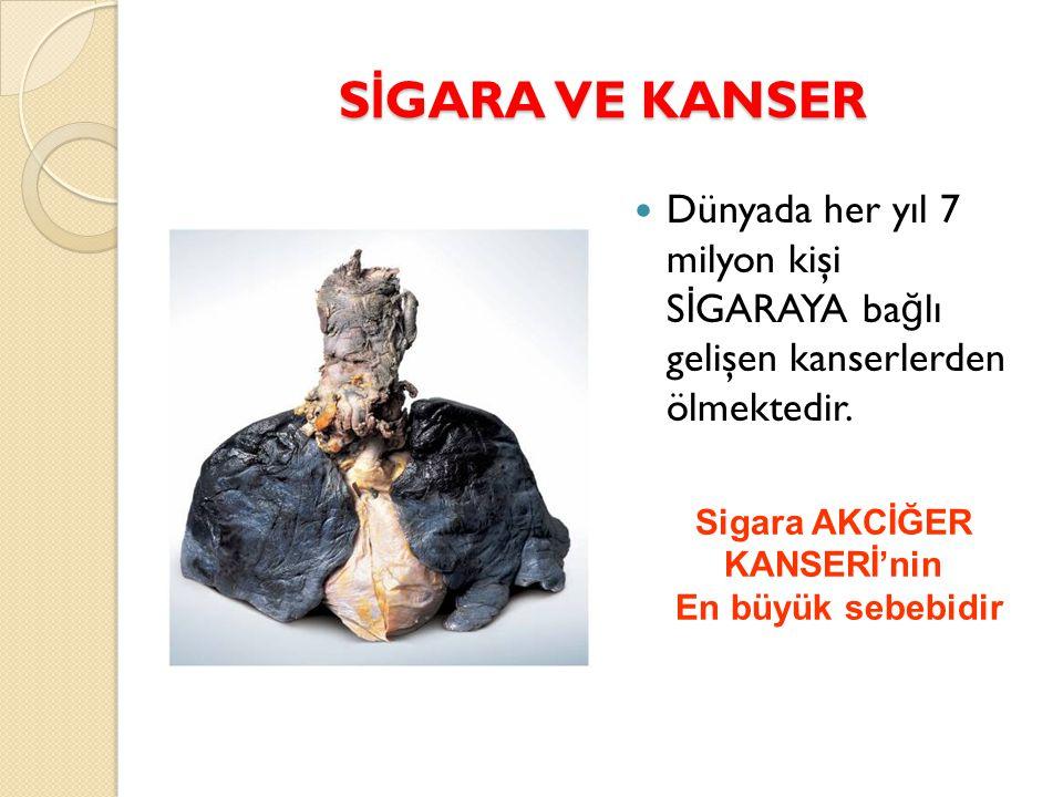 S İ GARA VE KANSER Dünyada her yıl 7 milyon kişi S İ GARAYA ba ğ lı gelişen kanserlerden ölmektedir. Sigara AKCİĞER KANSERİ'nin En büyük sebebidir