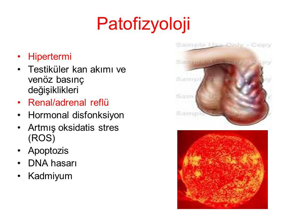 Patofizyoloji Hipertermi Testiküler kan akımı ve venöz basınç değişiklikleri Renal/adrenal reflü Hormonal disfonksiyon Artmış oksidatis stres (ROS) Ap