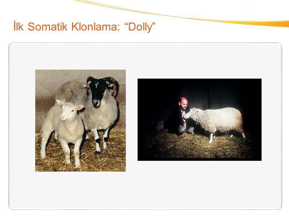 "İlk Somatik Klonlama: ""Dolly"""