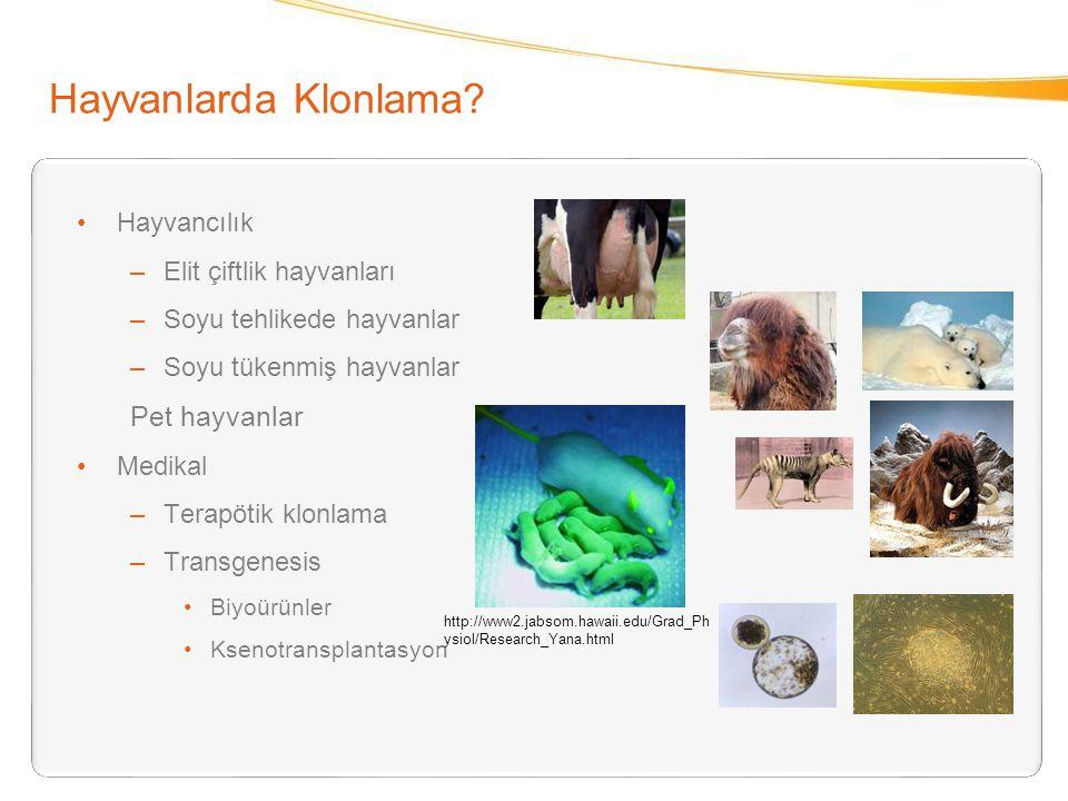 Hayvanlarda Klonlama? Hayvancılık –Elit çiftlik hayvanları –Soyu tehlikede hayvanlar –Soyu tükenmiş hayvanlar Pet hayvanlar Medikal –Terapötik klonlam