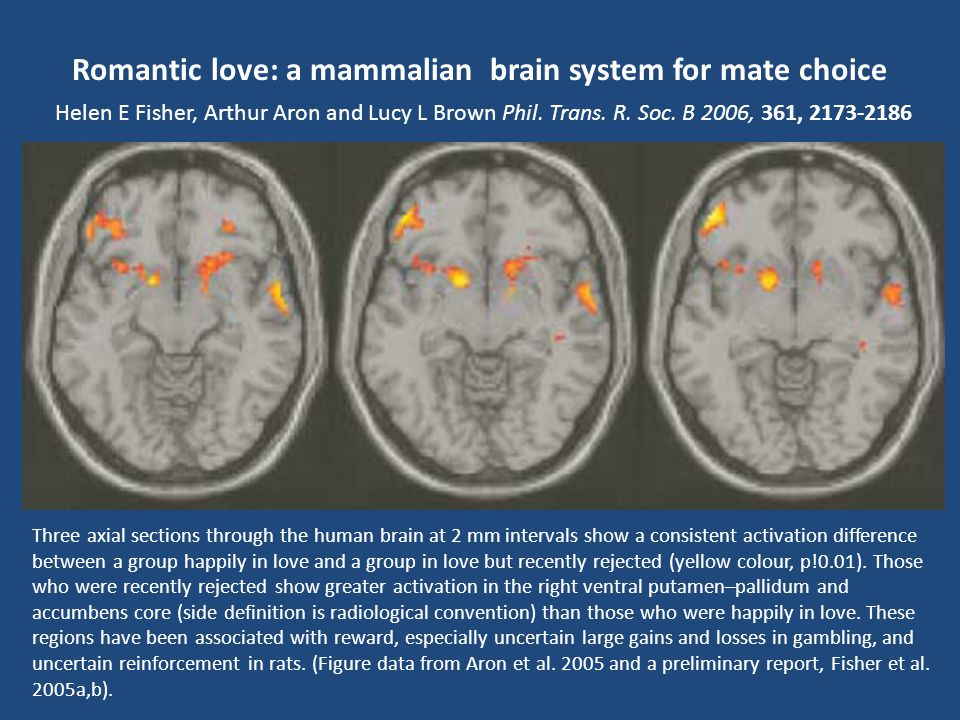 Romantic love: a mammalian brain system for mate choice Helen E Fisher, Arthur Aron and Lucy L Brown Phil. Trans. R. Soc. B 2006, 361, 2173-2186 Mamma