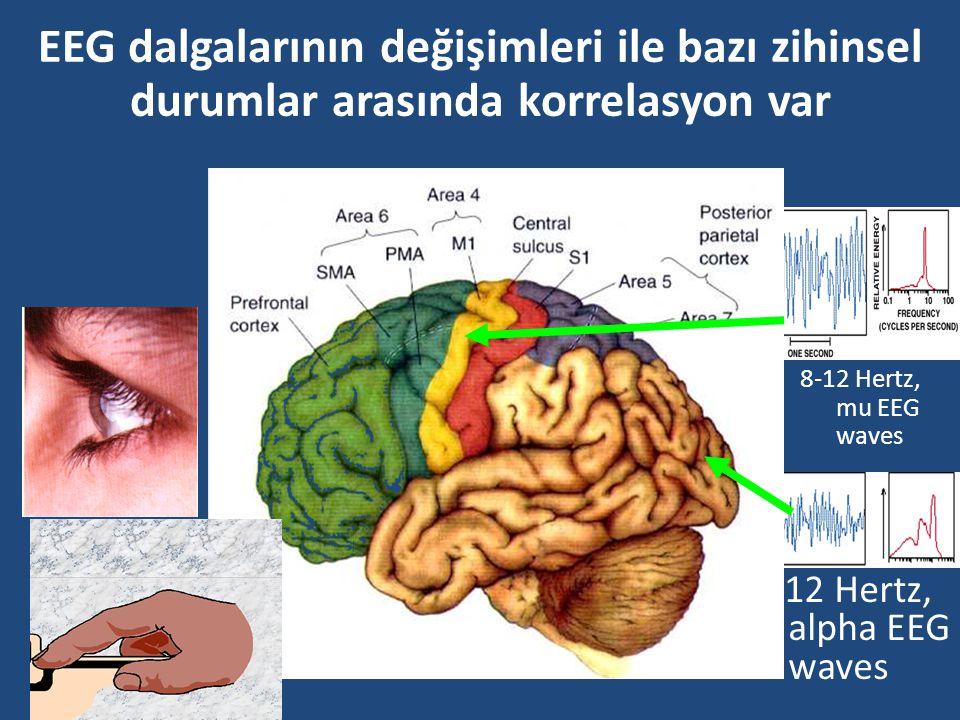 Harekete ilişkin düşünceler belirli korteks bölgelerini aktive ediyor Several EEG studies have also demonstrated that imagined movements elicited desy