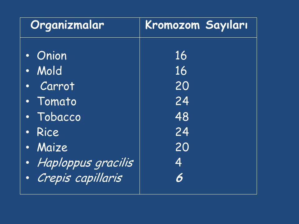 OrganizmalarKromozom Sayıları Human46 Chimpanzee48 Dog78 Horse64 Chicken78 Goldfish94 Fruit fly8 Mosquito6 Nematode11(m), 12(f) Horsetail216 Sequoia22
