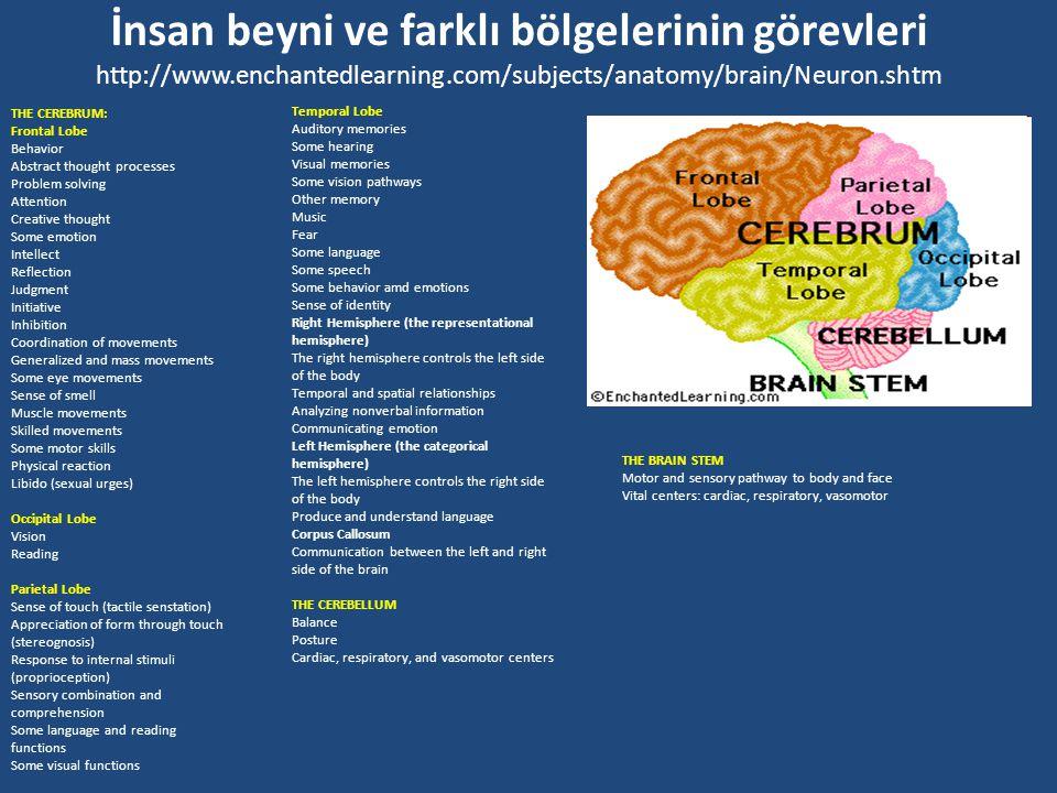 Hayvanlarda Sinir Sistemi ve Nöronlar