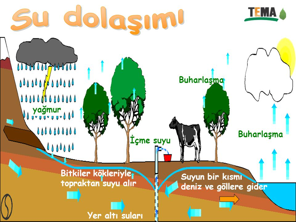 yağmur Bitkiler kökleriyle topraktan suyu alır Buharlaşma Suyun bir kısmı deniz ve göllere gider Yer altı suları Buharlaşma İçme suyu