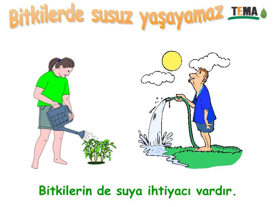 Bitkilerin de suya ihtiyacı vardır.