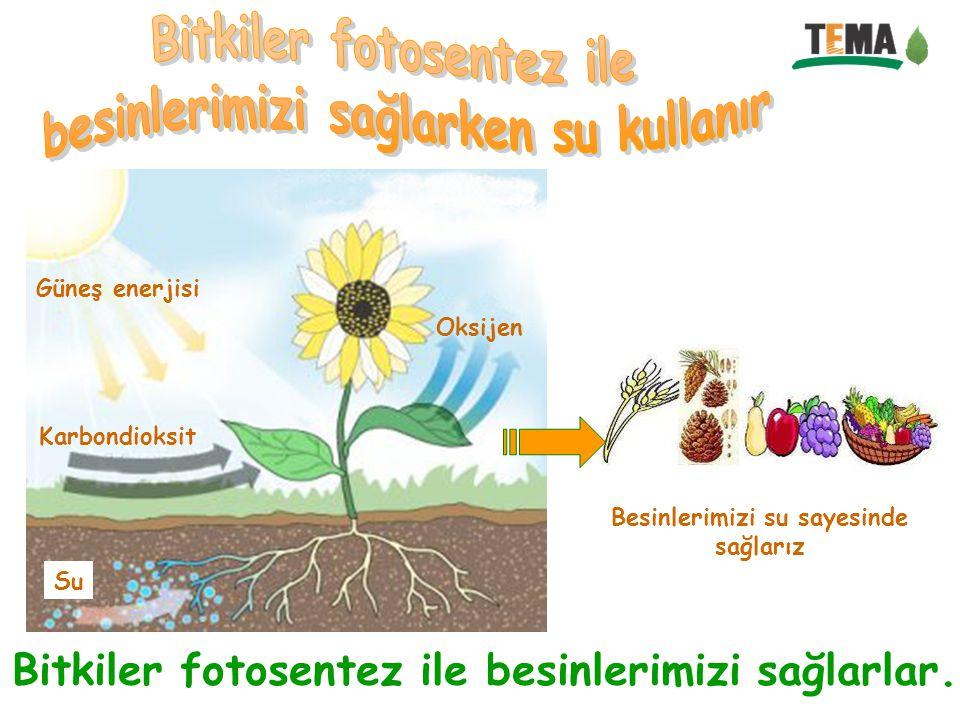 Bitkiler fotosentez ile besinlerimizi sağlarlar. Karbondioksit Oksijen Su Güneş enerjisi Besinlerimizi su sayesinde sağlarız