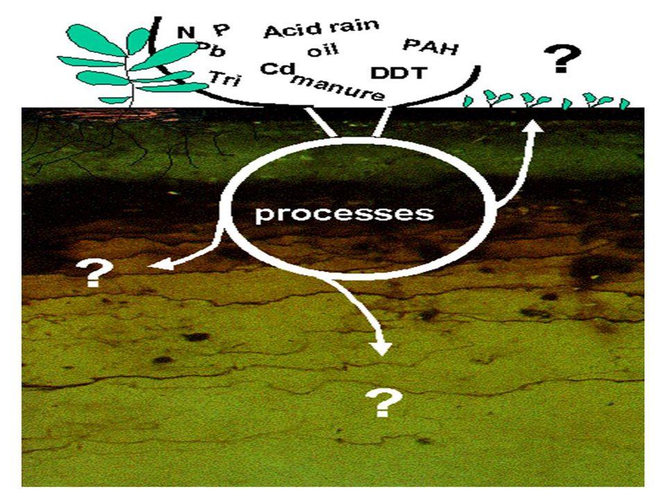 05.09.2014KTU-DENİZ BİLİMLERİ FAKÜLTESİ18 Kirletici Kaynaklar 1.Karasal kökenli a)Katı atıklar ve yüzey suları(evsel atıklar) b)İzale suları ve endüstriyel atıklar 2.