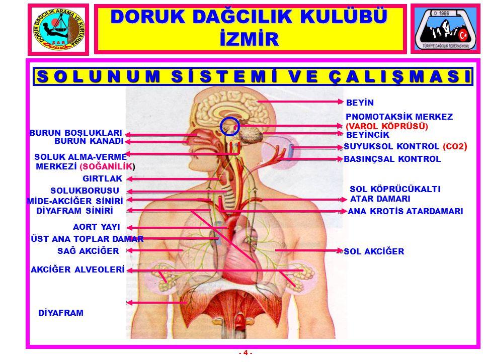 SOLUNUMDA ORGANLARIN GÖREVLERİ 1.