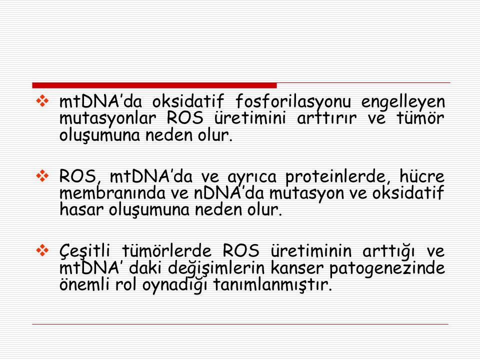  mtDNA'da oksidatif fosforilasyonu engelleyen mutasyonlar ROS üretimini arttırır ve tümör oluşumuna neden olur.  ROS, mtDNA'da ve ayrıca proteinlerd