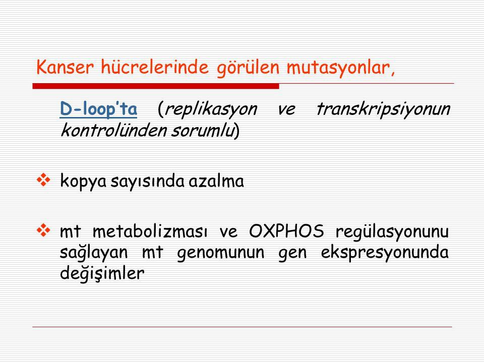 Kanser hücrelerinde görülen mutasyonlar, D-loop'ta (replikasyon ve transkripsiyonun kontrolünden sorumlu)  kopya sayısında azalma  mt metabolizması