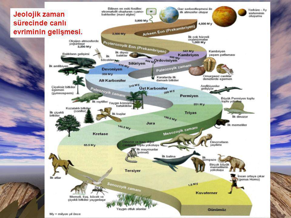 Jeolojik zaman sürecinde canlı evriminin gelişmesi.