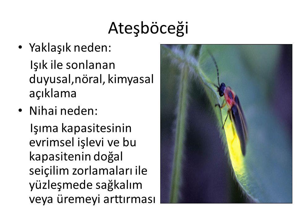 Ateşböceği Yaklaşık neden: Işık ile sonlanan duyusal,nöral, kimyasal açıklama Nihai neden: Işıma kapasitesinin evrimsel işlevi ve bu kapasitenin doğal seiçilim zorlamaları ile yüzleşmede sağkalım veya üremeyi arttırması