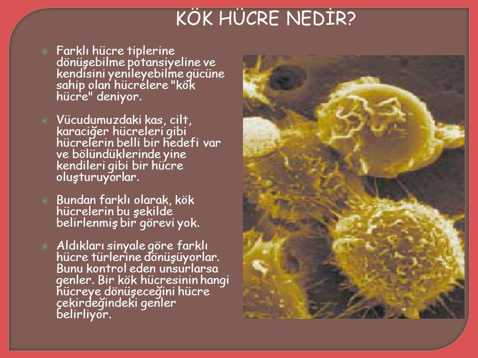 KULLANIM ALANLARI Normal görevini yapamayan veya ölen hücrelerin yerine yenileri gelmediği zaman organlar çalışamıyor ve çeşitli hastalıklar meydana geliyor.