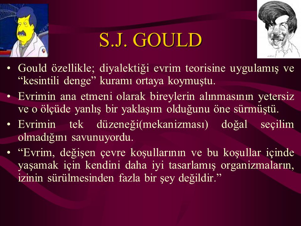 """S.J. GOULD Gould özellikle; diyalektiği evrim teorisine uygulamış ve """"kesintili denge"""" kuramı ortaya koymuştu. Evrimin ana etmeni olarak bireylerin al"""
