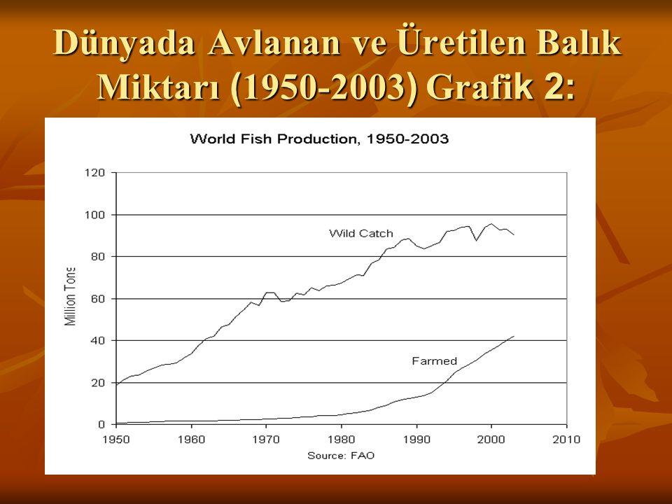 Dünyada Avlanan ve Üretilen Balık Miktarı ( 1950-2003 ) Grafi k 2: