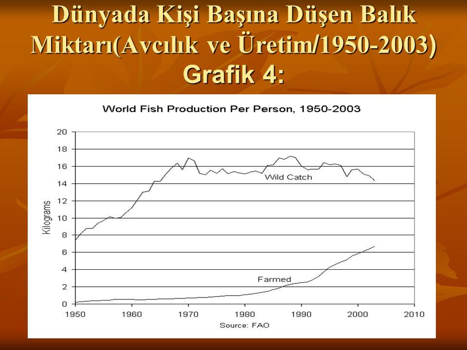 Dünyada Kişi Başına Düşen Balık Miktarı(Avcılık ve Üretim / 1950-2003 ) Grafik 4: