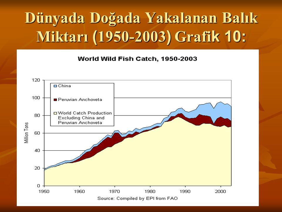 Dünyada Doğada Yakalanan Balık Miktarı ( 1950-2003 ) Grafi k 10: