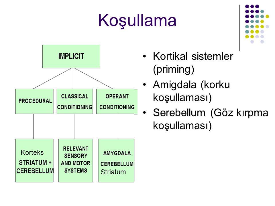 Koşullama Kortikal sistemler (priming) Amigdala (korku koşullaması) Serebellum (Göz kırpma koşullaması) Striatum Korteks