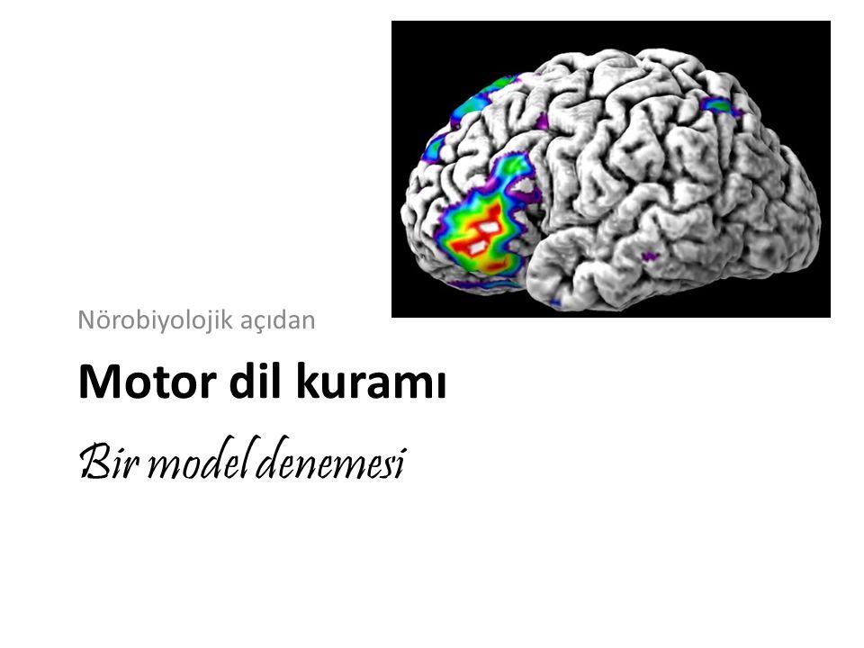 Bir model denemesi Nörobiyolojik açıdan Motor dil kuramı