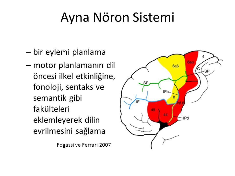 Ayna Nöron Sistemi – bir eylemi planlama – motor planlamanın dil öncesi ilkel etkinliğine, fonoloji, sentaks ve semantik gibi fakülteleri eklemleyerek