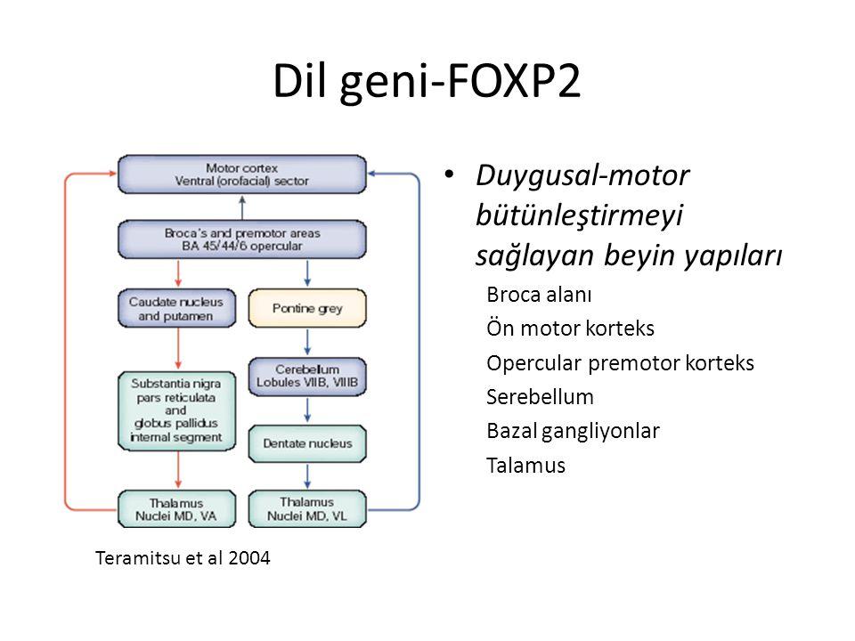 Dil geni-FOXP2 Duygusal-motor bütünleştirmeyi sağlayan beyin yapıları Broca alanı Ön motor korteks Opercular premotor korteks Serebellum Bazal gangliy