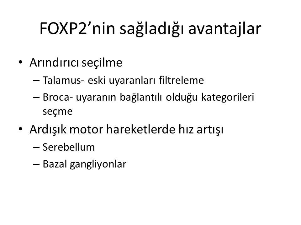 FOXP2'nin sağladığı avantajlar Arındırıcı seçilme – Talamus- eski uyaranları filtreleme – Broca- uyaranın bağlantılı olduğu kategorileri seçme Ardışık