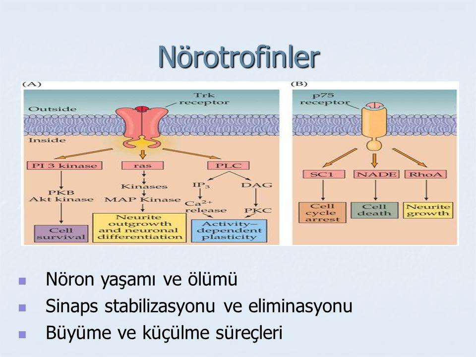 Nörotrofik faktörler - Lokal etki