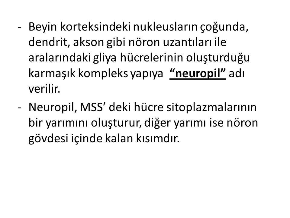 -Beyin korteksindeki nukleusların çoğunda, dendrit, akson gibi nöron uzantıları ile aralarındaki gliya hücrelerinin oluşturduğu karmaşık kompleks yapı