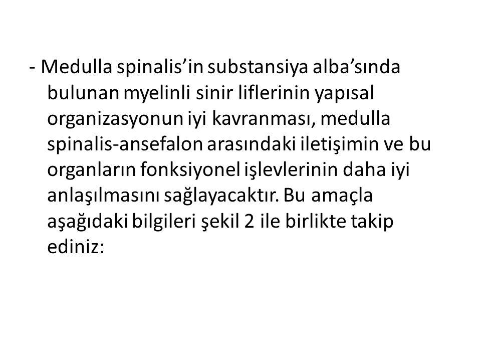 - Medulla spinalis'in substansiya alba'sında bulunan myelinli sinir liflerinin yapısal organizasyonun iyi kavranması, medulla spinalis-ansefalon arası