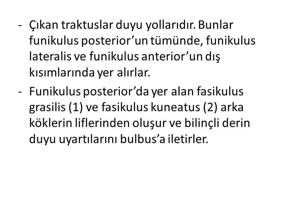 -Çıkan traktuslar duyu yollarıdır. Bunlar funikulus posterior'un tümünde, funikulus lateralis ve funikulus anterior'un dış kısımlarında yer alırlar. -