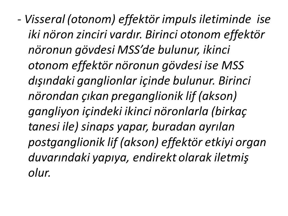 - Visseral (otonom) effektör impuls iletiminde ise iki nöron zinciri vardır. Birinci otonom effektör nöronun gövdesi MSS'de bulunur, ikinci otonom eff