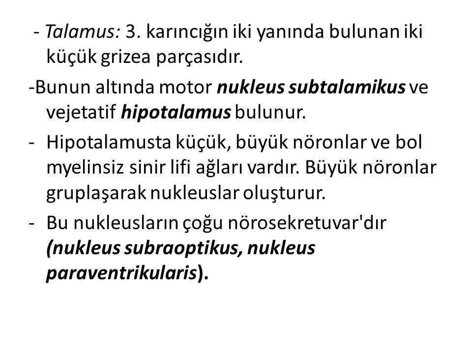 - Talamus: 3. karıncığın iki yanında bulunan iki küçük grizea parçasıdır. -Bunun altında motor nukleus subtalamikus ve vejetatif hipotalamus bulunur.
