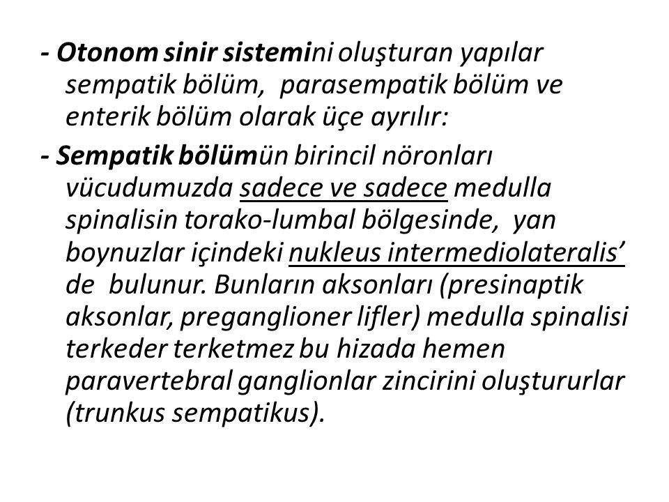 - Otonom sinir sistemini oluşturan yapılar sempatik bölüm, parasempatik bölüm ve enterik bölüm olarak üçe ayrılır: - Sempatik bölümün birincil nöronla