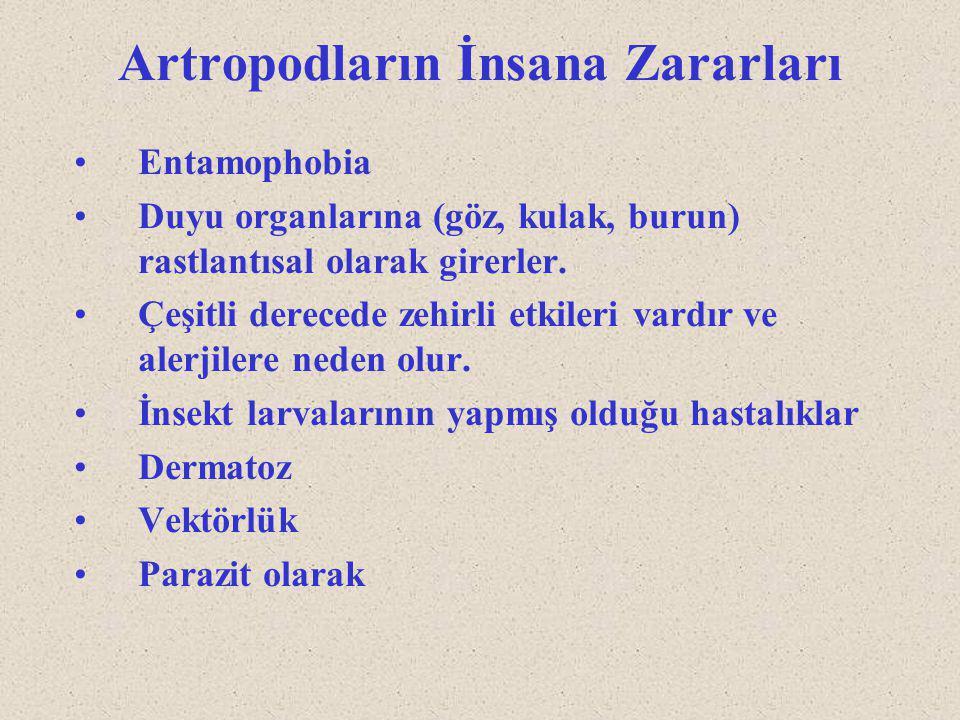 Artropodların İnsana Zararları Entamophobia Duyu organlarına (göz, kulak, burun) rastlantısal olarak girerler. Çeşitli derecede zehirli etkileri vardı