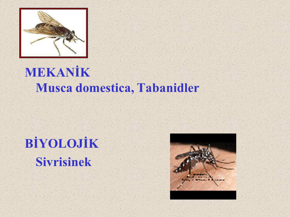 MEKANİK Musca domestica, Tabanidler BİYOLOJİK Sivrisinek